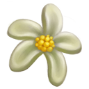 Ivory Chalice Magnolia